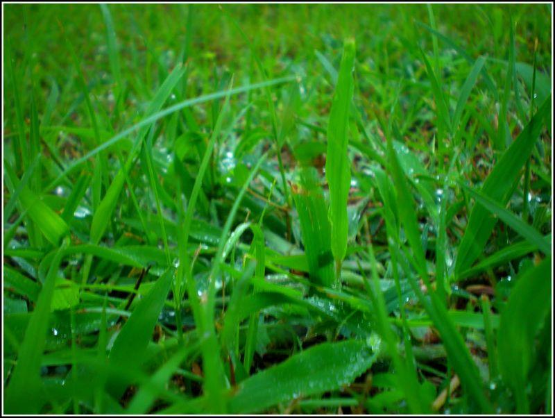 Grass Edit