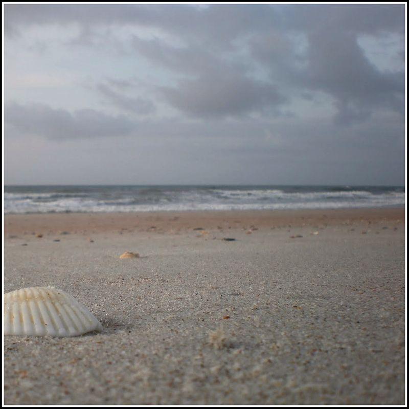 Aug 14 H Shell 1