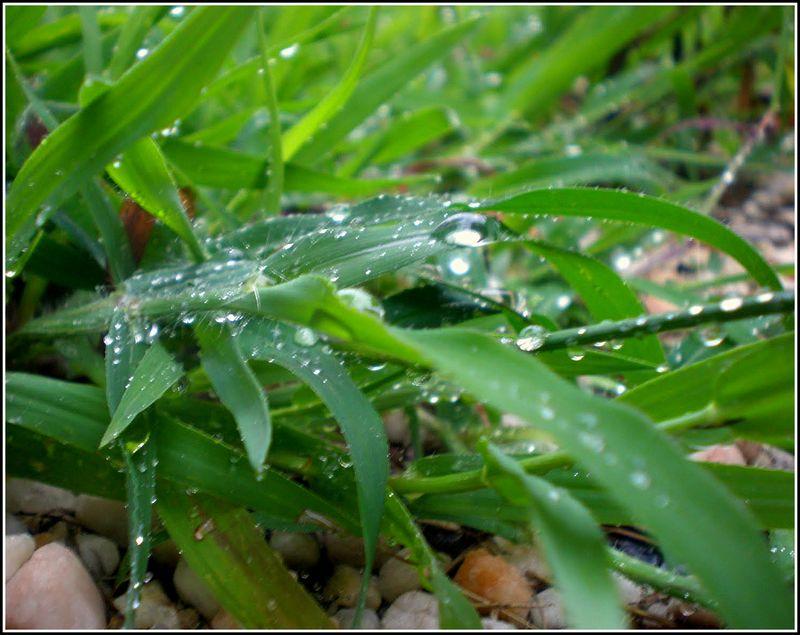 Walkway Weeds Edit