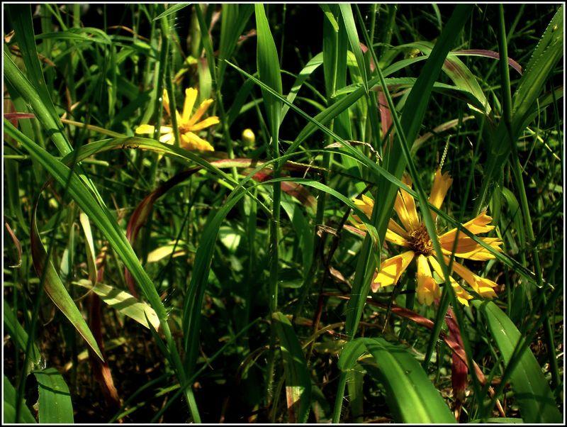 Flowers Edit 1